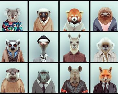 9221 - ¿Qué animal eres?