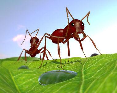 8808 - ¿Qué hormiga eres?