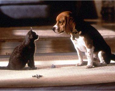 5252 - ¿Eres perro o gato?