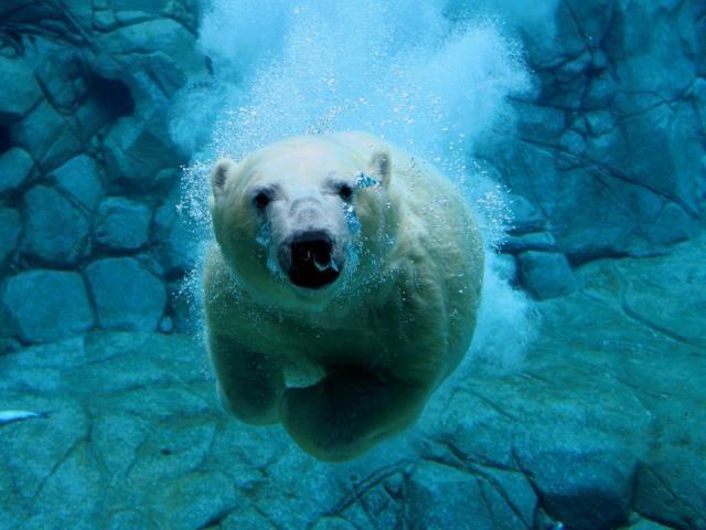 ¿Donde habitán los osos polares?